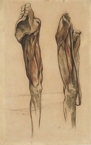 Study of two echorche legs