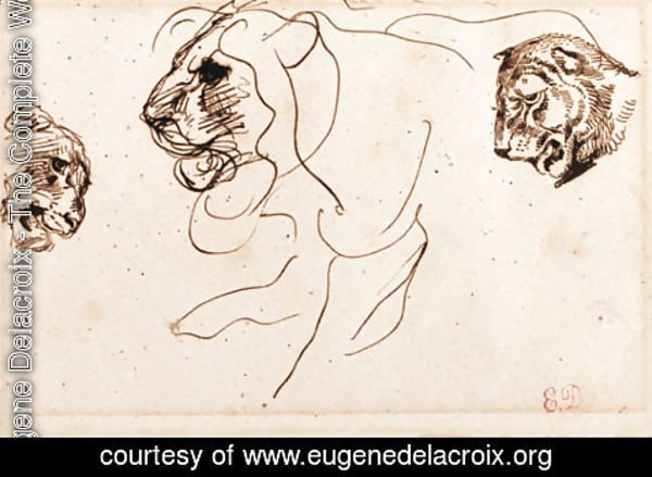 Eugene Delacroix - Three heads of lions