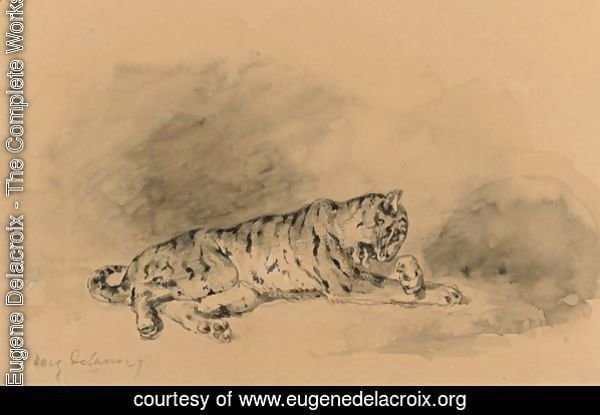 Study Of A Tiger
