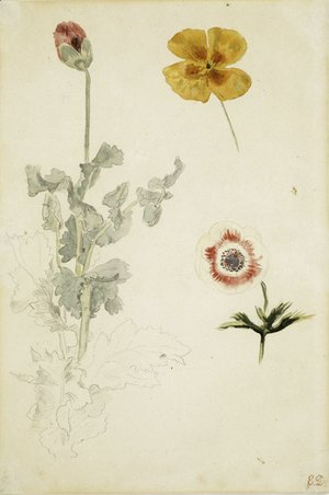 Eugene Delacroix - Study of Flowers